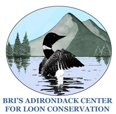 Adirondack Center For Loon Conservation